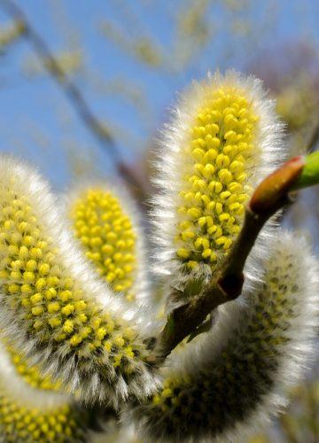 Алергические заболевания, их динамика.